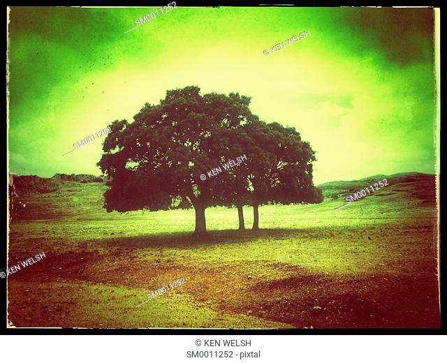 Landscape. Lone trees in the Serrania de Ronda, Malaga Province, Andalusia, southern Spain