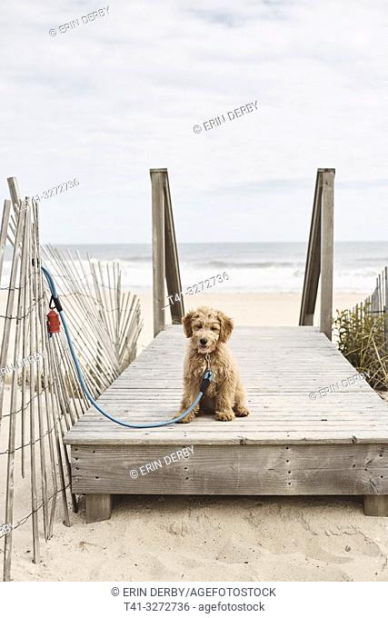A puppy at the beach