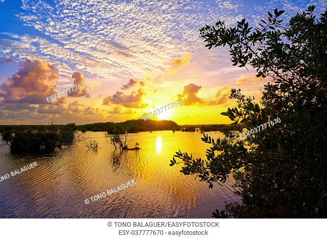 Mangroove sunset in Riviera Maya lagoon of Mexico