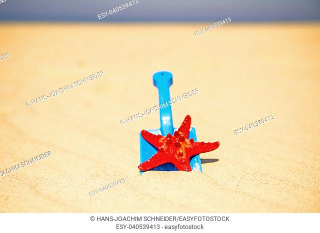 toy, shovel with sea star on a sunny beach
