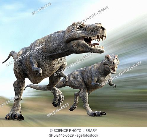 Tyrannosaurus rex dinosaurs running, artwork  T  rex was a carnivorous theropod dinosaur that existed in the Upper Mastrichtian stage of the Cretaceous Period