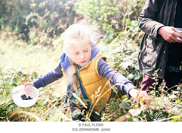 Girl picking blackberries