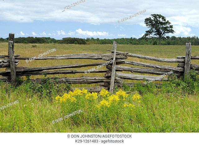 Cedar split-rail fence with goldenrod