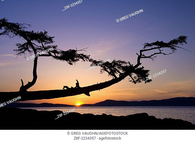 Sunset over the San Juan Islands and Rosario Strait with the leaning tree in Washington Park on Fidalgo Island, Washington