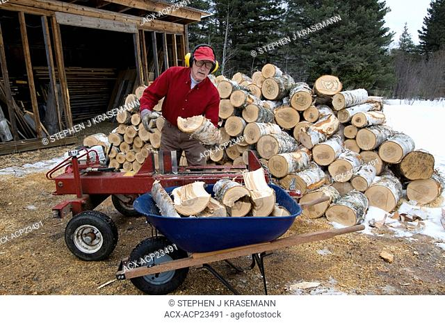 Man using power log-splitter to split birch firewood, Ontario, Canada