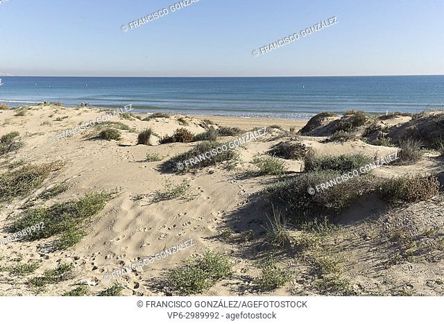 Dunes in the Marina in the municipality of Elche, province of Alicante in Spain