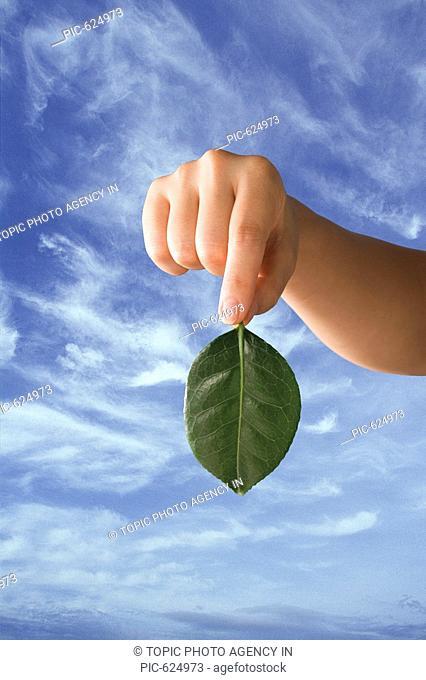 A hand holding a green leaf,Korea