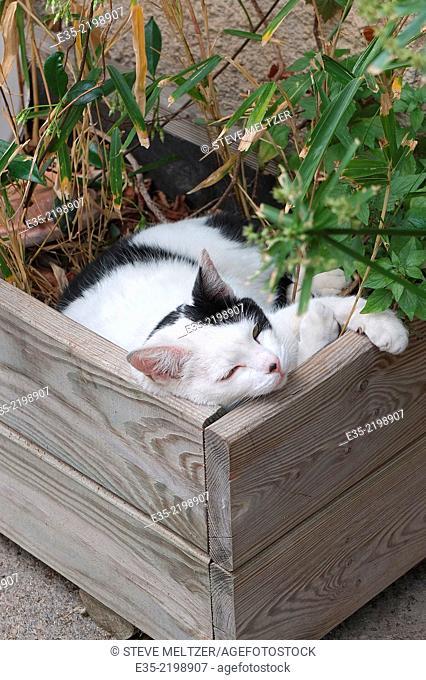 A cat sleeps in a flower box