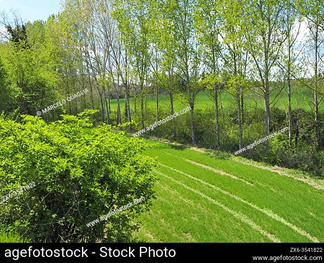 Tractor trails at pasture. Springtime at Olost village countryside. Lluçanès region, Barcelona province, Catalonia, Spain