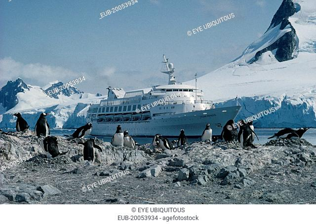 Ocean Princess cruise ship with penguin colony on rocks in foreground