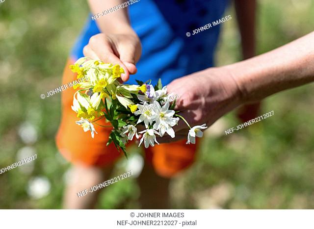 Hands holding spring flowers