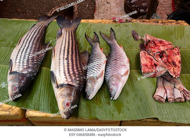 Fish exposed in open market