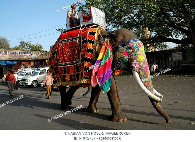 Decorated elephant at the Gangaur Festival in Jaipur, Rajasthan, India, Asia
