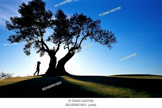 Person playing golf under tree