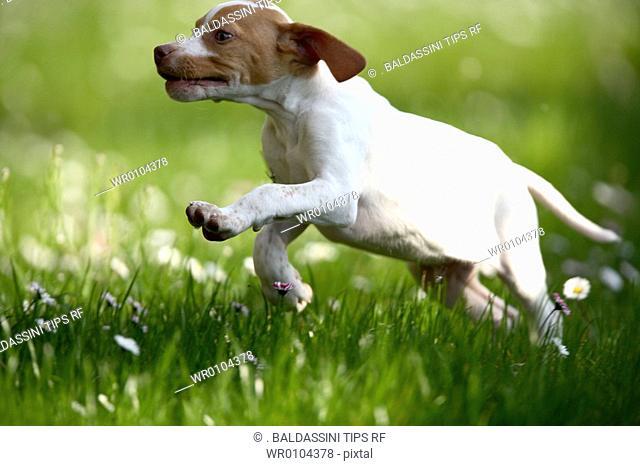 dog jump in the garden