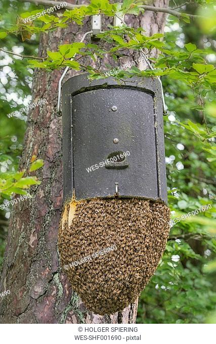 Germany, Baden-Wuerttemberg, Ueberlingen, beehives on an overwinterung box for a bat