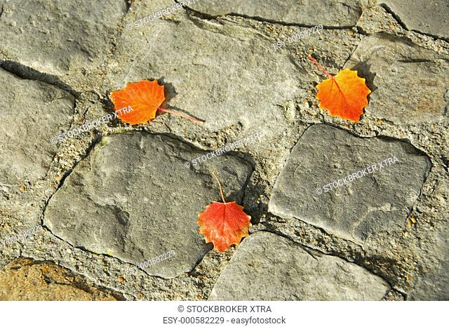 Background of old cobblestone pavement with autumn leaves
