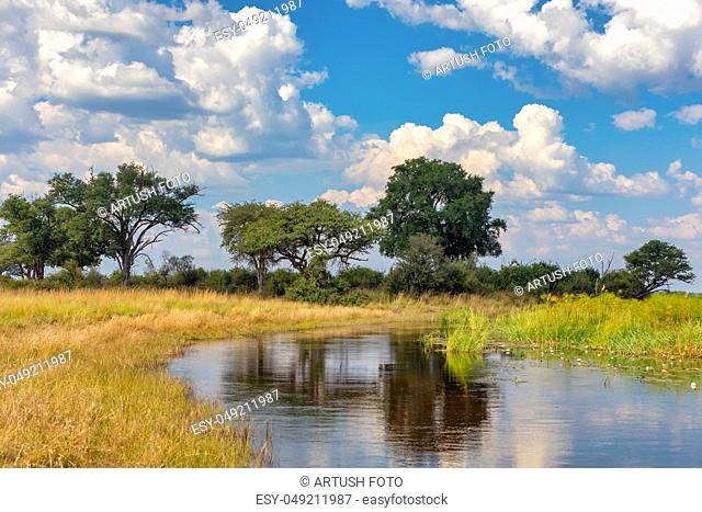 Typical african landscape in national park Bwabwata on Caprivi Strip, Namibia wilderness