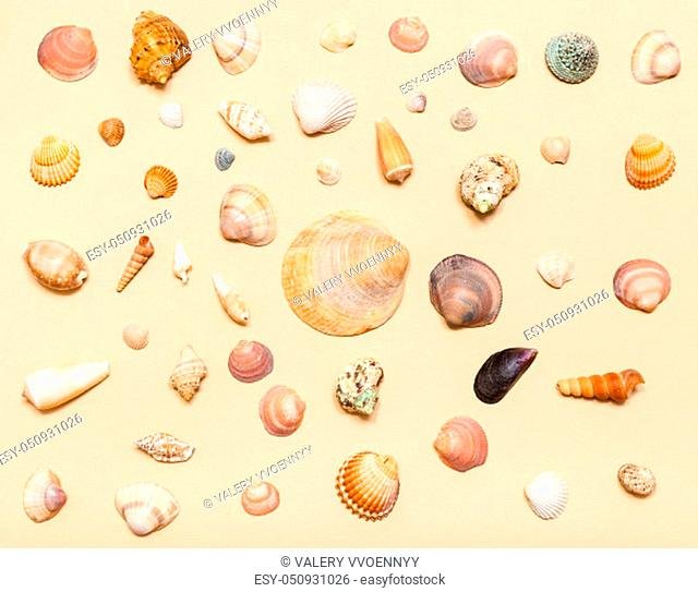 top view of various natural dried sea shells on sand yellow colour pastel paper
