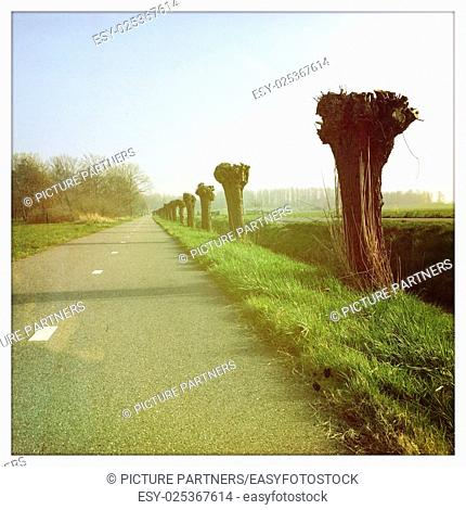 Road with pruned Pollard willows in the countryside