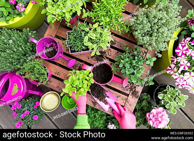 Planting herb and vegetable garden on balcony