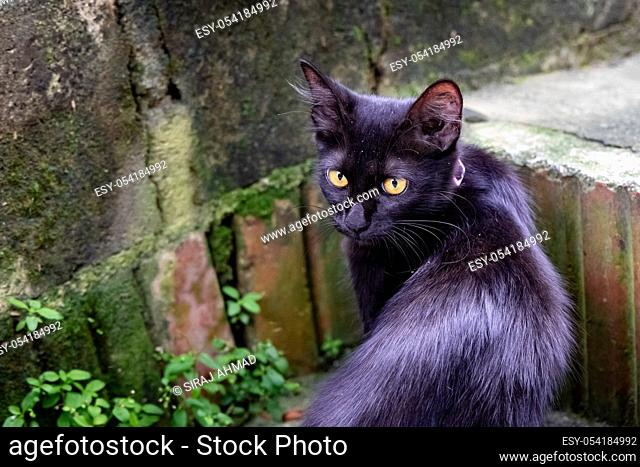 Black cat with yellow eyes looking curiously at the camera