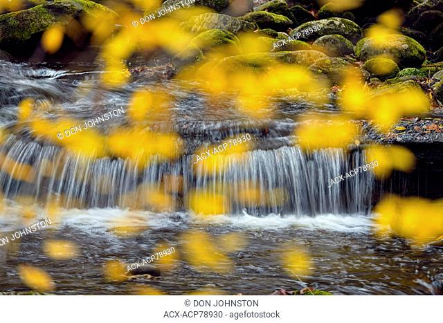 Autumn colour in the trees overhanging a waterfall in Laurel Creek, Great Smoky Mountains NP, Tennessee, USA