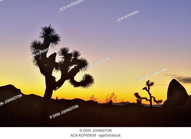 Mojave desert at dawn with Joshua trees, Joshua Tree National Park, California, USA