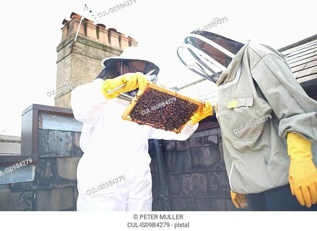 Two beekeepers inspecting hive frame