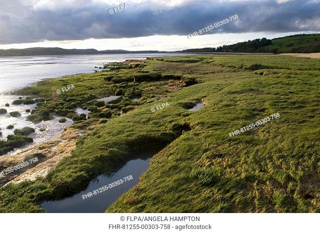 View of estuary saltmarsh and mudflats, Merse habitat, Caerlaverock N N R , Solway Firth, Dumfries and Galloway, Scotland, spring