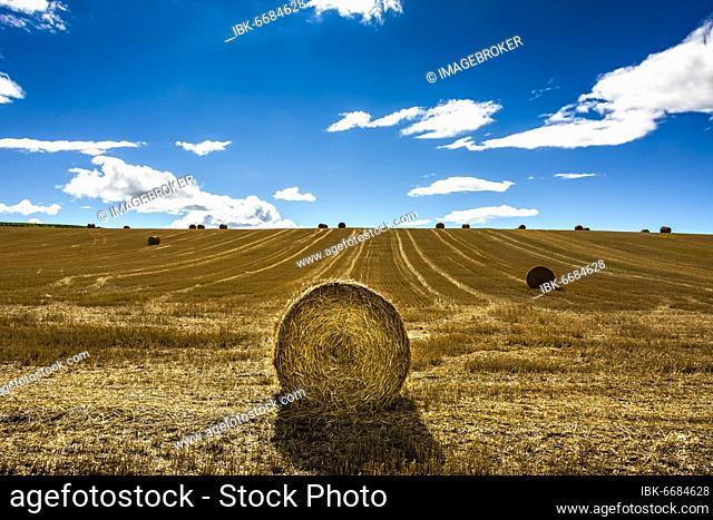 Straw bales after harvest. Limagne plain, Puy-de-Dôme, Auvergne-Rhône-Alpes, France, Europe