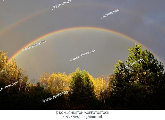 Rainbow and autumn aspens, Greater Sudbury, Ontario, Canada
