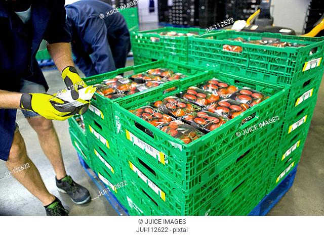 Workers labeling crates of packaged tomatoes in food processing plant