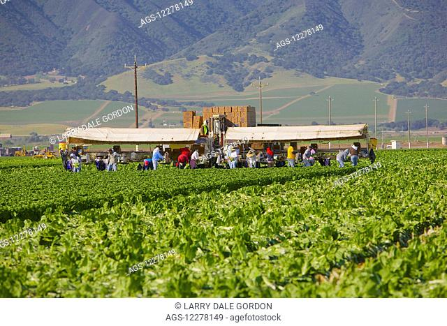 Migrant farm workers; California, United States of America
