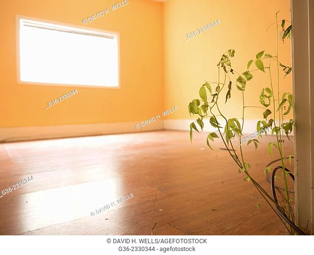 Interior of a foreclosed house, with a plant growing through the floor, Portland, Oregon