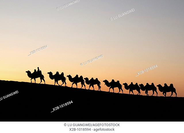 In October 2009, China's Inner Mongolia Autonomous Region EJINAQI, camel train