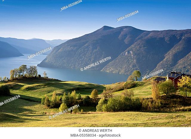 View over meadows and trees towards the Lustrafjord, the inner branch of the Sognefjord, Lustrafjord, Sogn og Fjordane, Norway, Europe