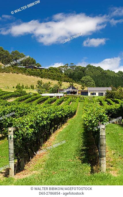 New Zealand, North Island, Coromandel Peninsula, Cooks Beach, Mercury Bay Estate Winery