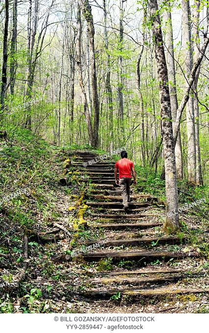 Trail at Holmes Educational State Forest - Hendersonville, North Carolina, USA