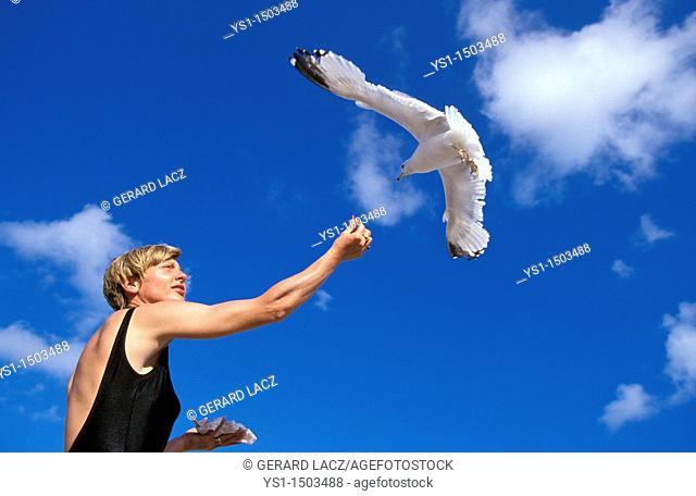 Ring Billed Gull, larus delawarensis, Woman giving Food, Bird in Flight, Florida