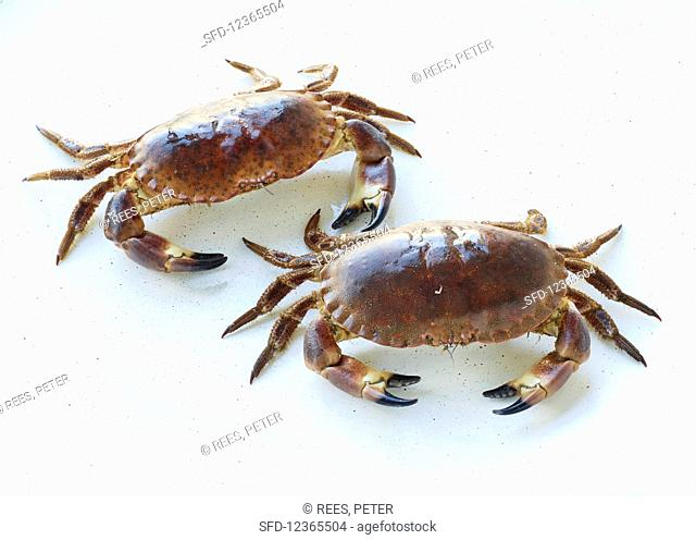 Two crabs on a white background