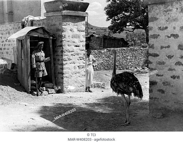 Africa, Ethiopia, Mekele, guarding a stately home with ostrich, 1930-40