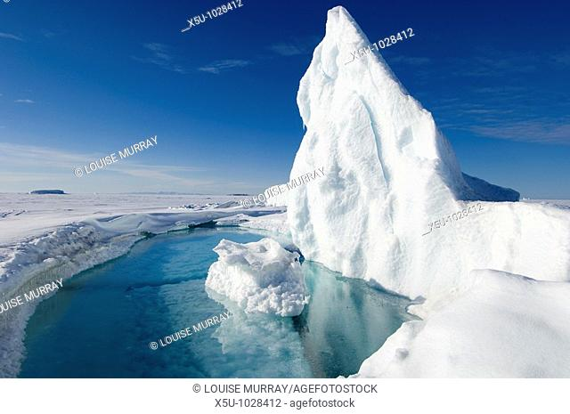 During the Arctic spring, the surface of the frozen arctic ocean begins to crack under stress especially around large frozen in icebergs which flex the...