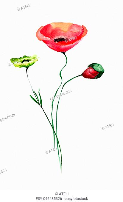 Colorful wild flower with Poppies flowers, watercolor illustration