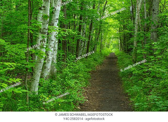 Path though green summer woods in Two Harbors Minnesota
