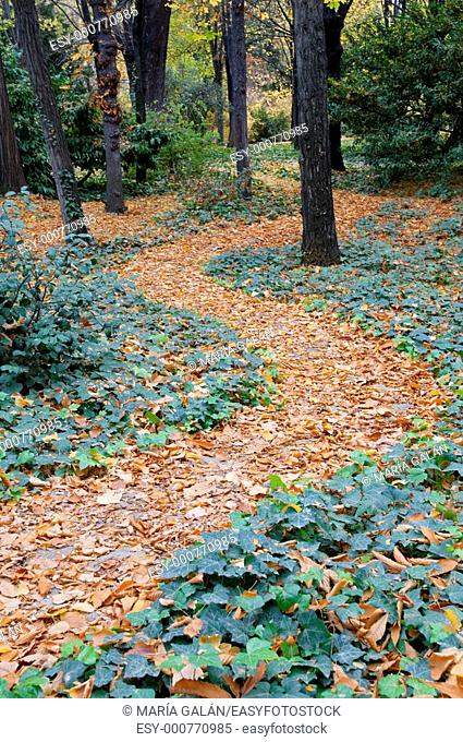 Path in autumn. Campo del Moro gardens, Madrid, Spain