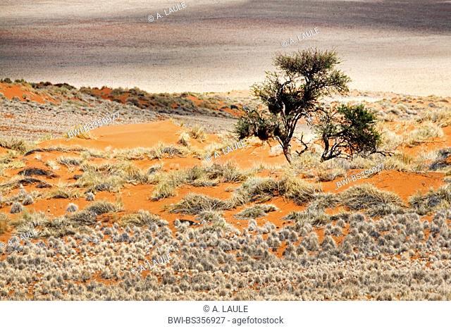 bush and grasses in the desert, Namibia, Namib Naukluft National Park