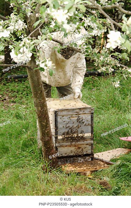 Bienenvolk soll umziehen