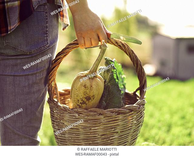 Woman carrying basket of harvested vegetables, partial view