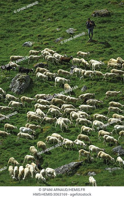 France, Ariege, Biros, Sentein, Eylie, La Plagne, feast of transhumance of herds in the mountains at the beginning of summer
